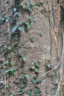Jungle texture