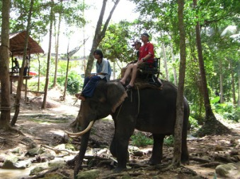 Image result for elephant riding platform